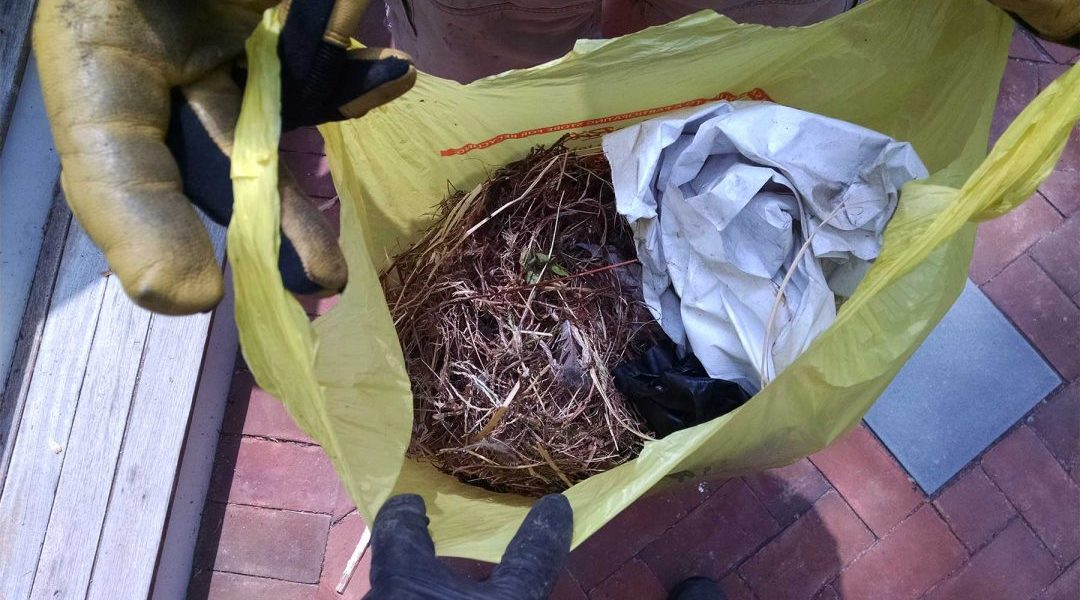 The bird nest is removed, once the babies have grown, and disposed of.