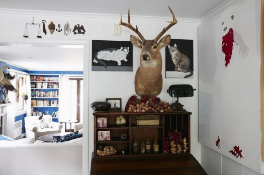 Inside Stories | A Menagerie of Curiosities Finds a Home in New Jersey