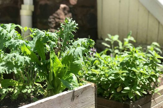 Urbanites in the Suburbs Find Your Green Thumb